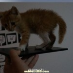 Xperia Z Ultra Togari Specifciations – Photo Leaked with Cat on Top
