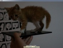 Xperia Z Ultra Togari Photo Leaked with Cat on Top